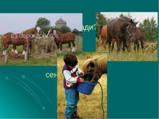 Чем питаются лошади? сено