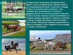 Лошадь была приручена человеком очень давно, и все это время была самым первы