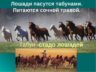 Лошади пасутся табунами. Питаются сочной травой. Табун -стадо лошадей