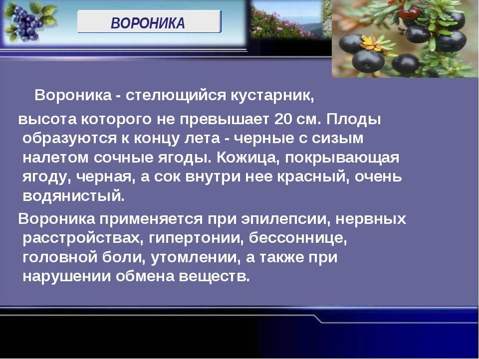 ВОРОНИКА Вороника - стелющийся кустарник, высота которого не превышает 20 см....