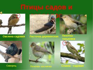 Птицы садов и огородов Овсянка садовая Пеночка - теньковка Славка - садовая Л