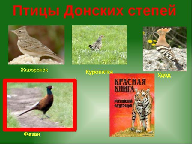 Птицы Донских степей Удод Фазан Куропатка Жаворонок