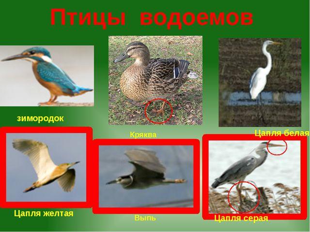 Птицы водоемов зимородок Цапля желтая Цапля серая Цапля белая Выпь Кряква