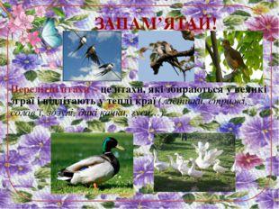 Перелітні птахи – це птахи, які збираються у великі зграї і відлітають у тепл
