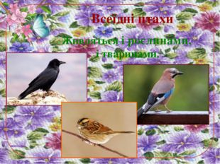 Всеїдні птахи Живляться і рослинами, і тваринами.