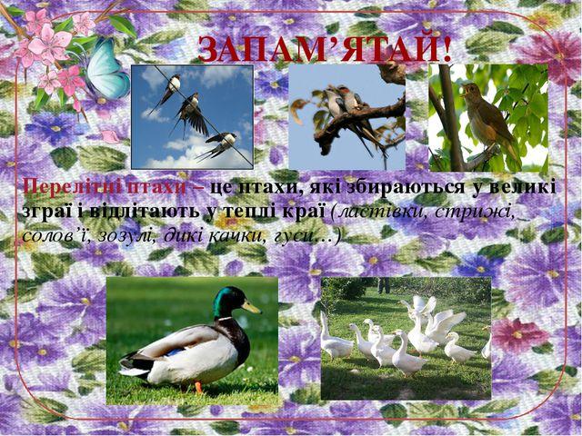 Перелітні птахи – це птахи, які збираються у великі зграї і відлітають у тепл...