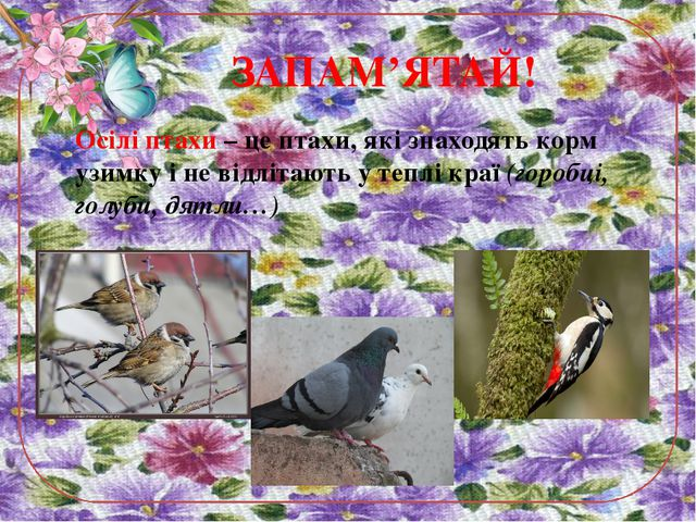 ЗАПАМ'ЯТАЙ! Осілі птахи – це птахи, які знаходять корм узимку і не відлітають...
