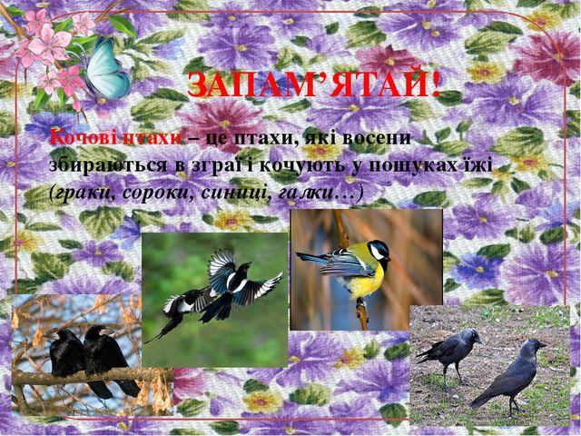 ЗАПАМ'ЯТАЙ! Кочові птахи – це птахи, які восени збираються в зграї і кочують...