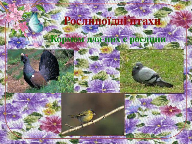 Рослиноїдні птахи Кормом для них є рослини