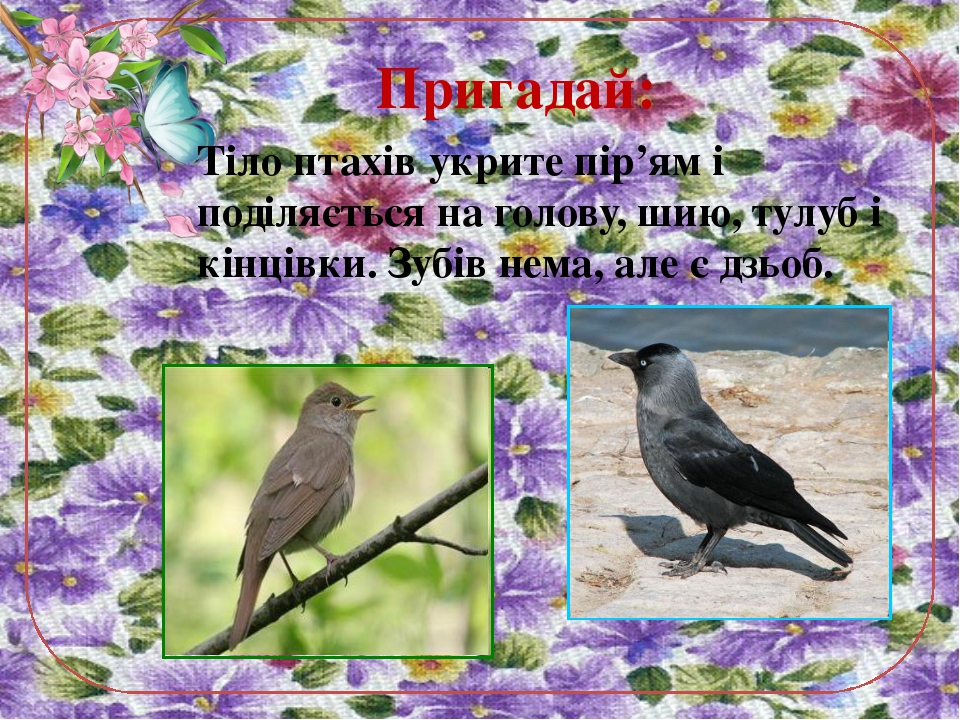 Тіло птахів укрите пір'ям і поділяється на голову, шию, тулуб і кінцівки. Зуб...