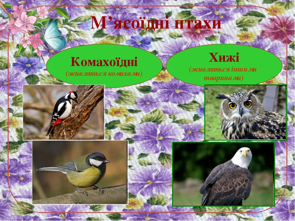 М'ясоїдні птахи Комахоїдні (живляться комахами) Хижі (живляться іншими тварин...