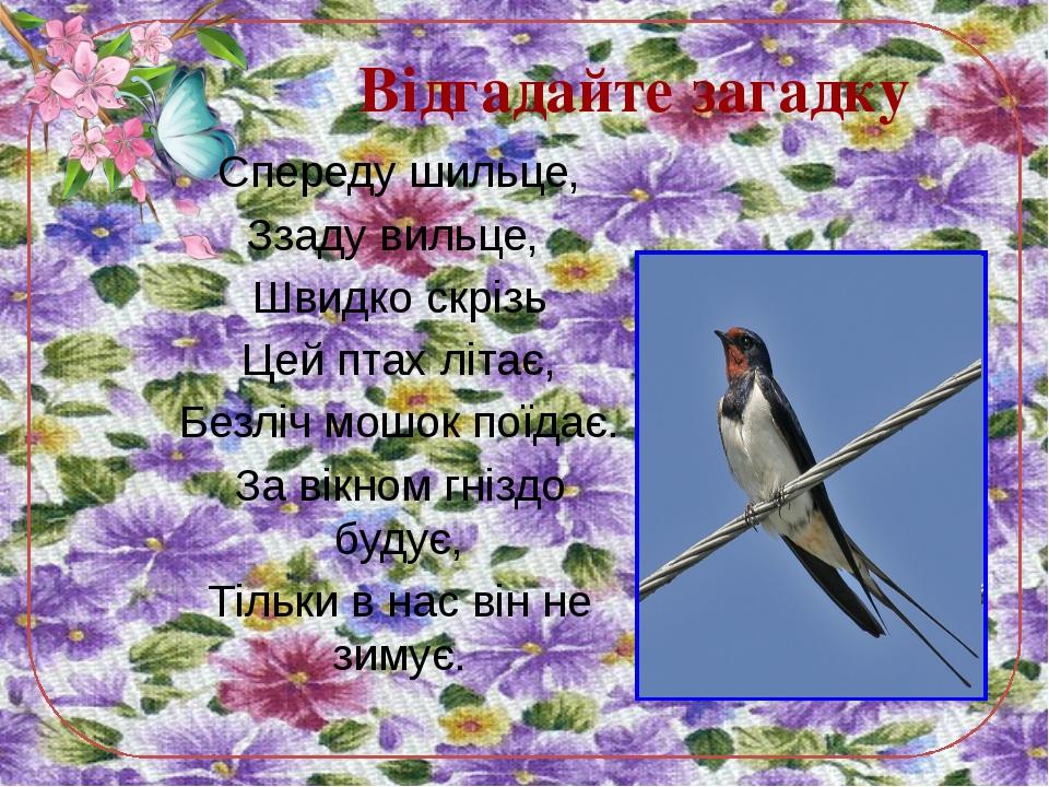 Спереду шильце, Ззаду вильце, Швидко скрізь Цей птах літає, Безліч мошок поїд...