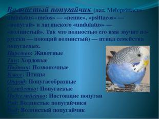 Волнистый попугайчик (лат. Melopsittacus undulatus-«melos»— «пение», «psitt