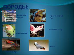 ПОРОДЫ: Волнистый попугай неразлучник Красный Ара Красно-желтый Ара Розовый К