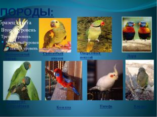 ПОРОДЫ: Желтохохлатый какаду Кольчатые попугайчики Синелобый амазон Ожереловы