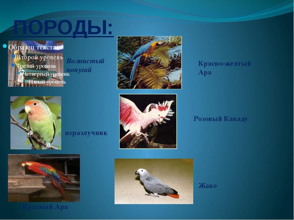 ПОРОДЫ: Волнистый попугай неразлучник Красный Ара Красно-желтый Ара Розовый К...