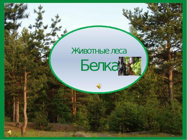 Животные леса Белка