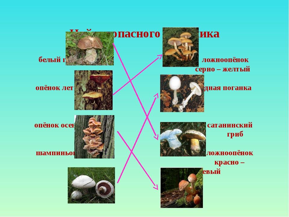 Найди опасного двойника белый гриб ложноопёнок серно – желтый опёнок летний б...