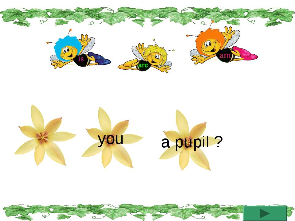 you a pupil ?