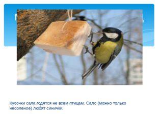 Кусочки сала годятся не всем птицам. Сало (можно только несоленое) любят син