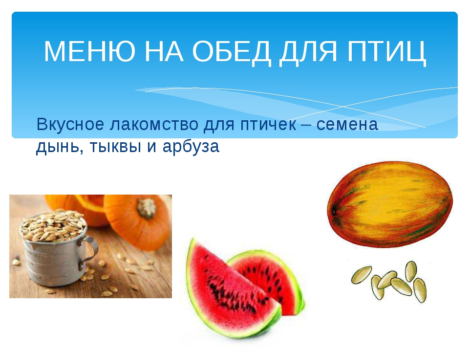Вкусное лакомство для птичек – семена дынь, тыквы и арбуза МЕНЮ НА ОБЕД ДЛЯ П...