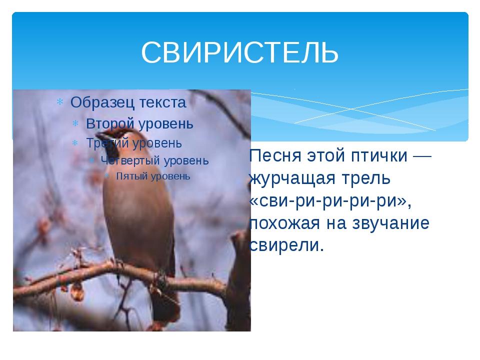 СВИРИСТЕЛЬ Песня этой птички— журчащая трель «сви-ри-ри-ри-ри», похожая на з...