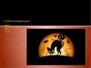 21. Where do pumpkins grow? • Vines • Hallophopb Stalks • Trees • Bushes