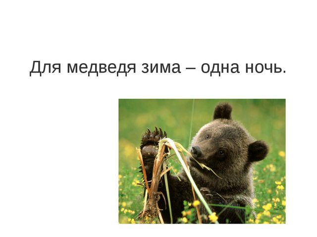 Для медведя зима – одна ночь.