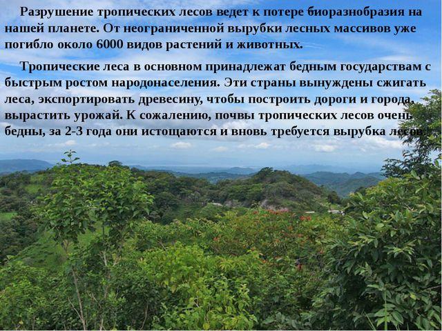 Разрушение тропических лесов ведет к потере биоразнобразия на нашей планет...