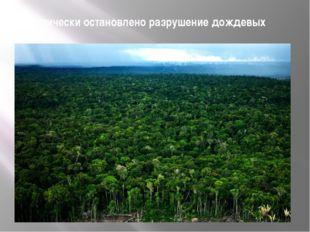 Практически остановлено разрушение дождевых лесов