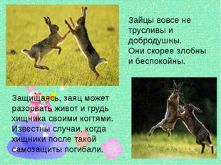 Защищаясь, заяц может разорвать живот и грудь хищника своими когтями. Извест
