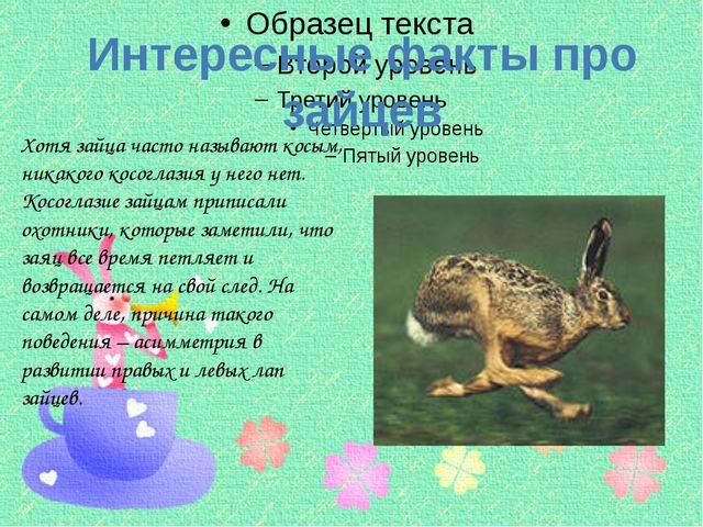 Хотя зайца часто называют косым, никакого косоглазия у него нет. Косоглазие...