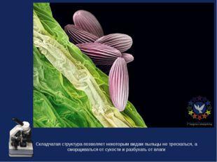 Складчатая структура позволяет некоторым видам пыльцы не трескаться, а сморщи