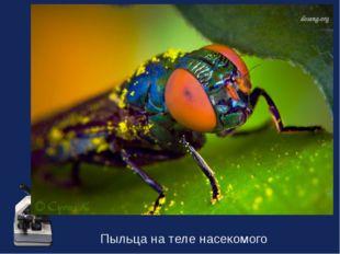 Пыльца на теле насекомого