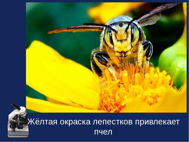 Жёлтая окраска лепестков привлекает пчел