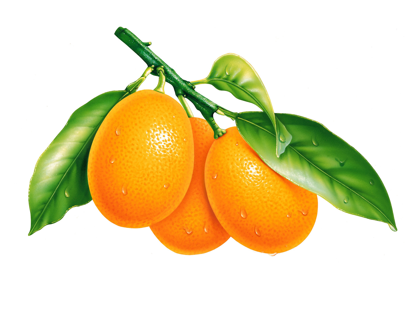 oranges-and-leaves-wallpapers_13089_1600x1200
