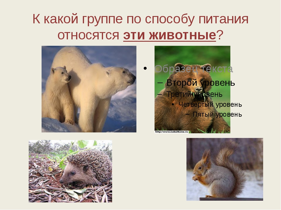 К какой группе по способу питания относятся эти животные?
