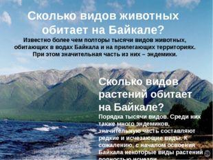Сколько видов растений обитает на Байкале? Порядка тысячи видов. Среди них та