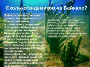 Байкал отличается большим количеством эндемичных, то есть нигде более не встр