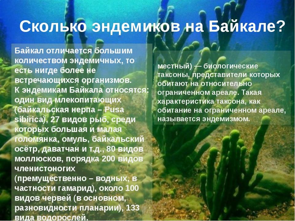 Байкал отличается большим количеством эндемичных, то есть нигде более не встр...