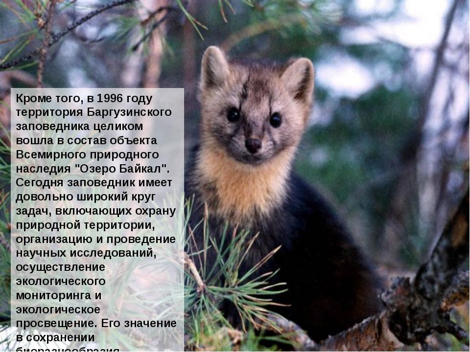 Кроме того, в 1996 году территория Баргузинского заповедника целиком вошла в...