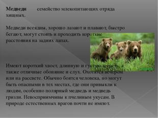 Медведи семейство млекопитающих отряда хищных. Медведи всеядны, хорошо лазают
