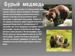 Разные народы сделали его персонажем своих сказок, легенд. Бурый медведь обла