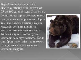 Бурый медведь впадают в зимнюю спячку. Она длится от 75 до 195 дней в году. С