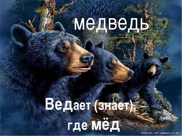 медведь Ведает (знает), где мёд