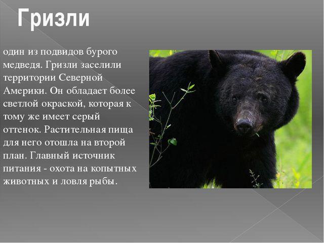 один из подвидов бурого медведя. Гризли заселили территории Северной Америки....