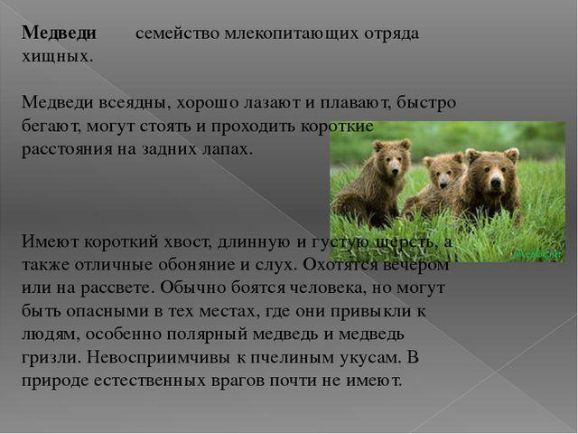 Медведи семейство млекопитающих отряда хищных. Медведи всеядны, хорошо лазают...