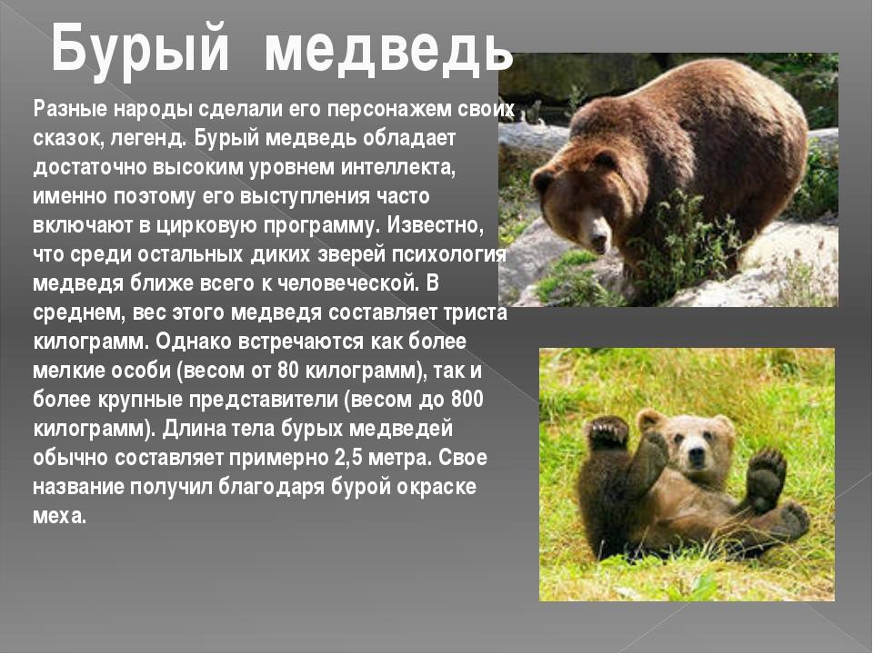 Разные народы сделали его персонажем своих сказок, легенд. Бурый медведь обла...