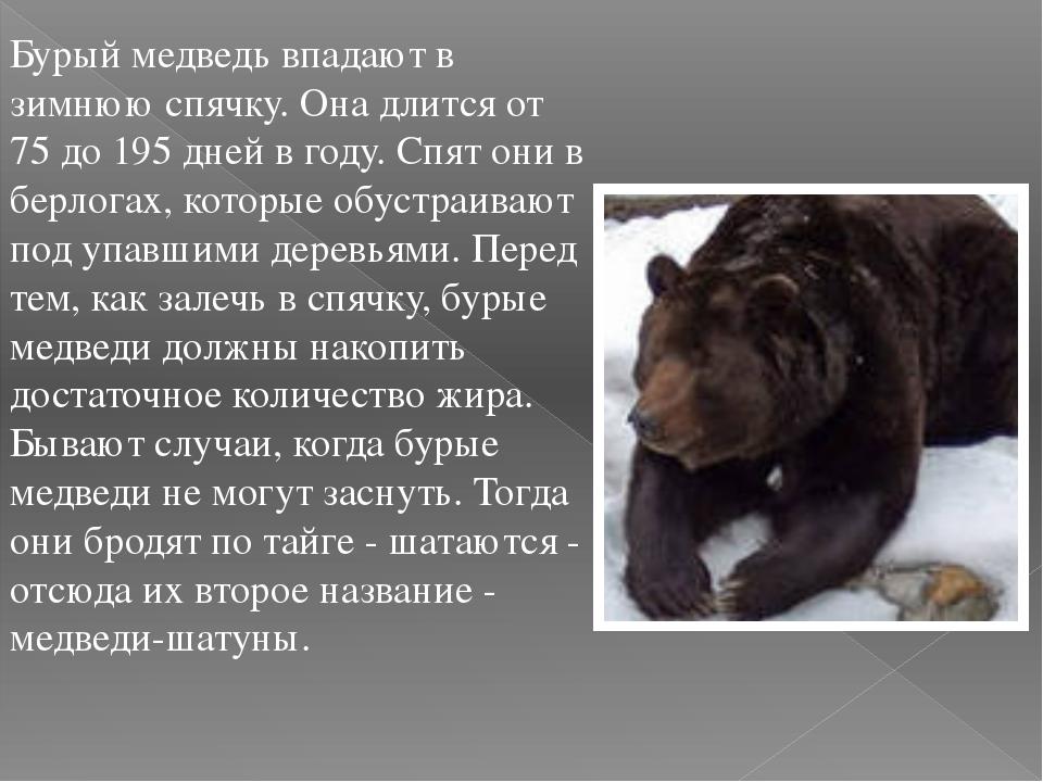 Бурый медведь впадают в зимнюю спячку. Она длится от 75 до 195 дней в году. С...