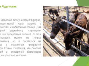 Зоопарк Чудо-ослик В селе Залесное есть уникальная ферма, где посетителей жде